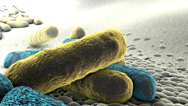 drug-resistant bacteria - bacterium stock videos & royalty-free footage