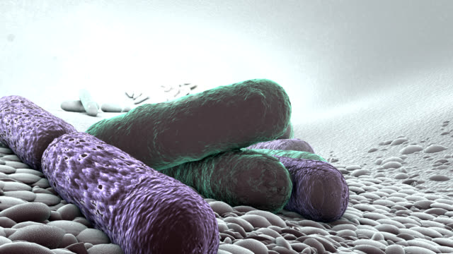 drug-resistant bacteria - bacterium stock videos and b-roll footage