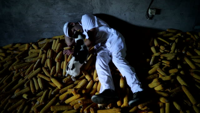 drunk butcher lying on pile of corn - jack russel video stock e b–roll