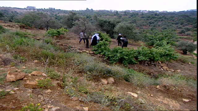 of druze farmers laboring on their agricultural terraces. the druze are a monotheistic esoteric ethnoreligious group who self-identify as unitarians. - plough stock videos & royalty-free footage