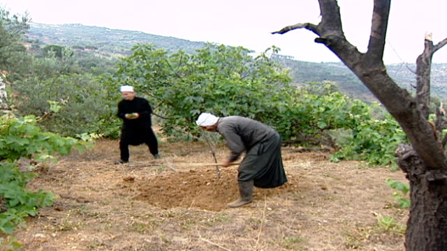 of druze sheikh picking vine leaves, and druze farmer digging soil with mattock hoe. the druze are a monotheistic esoteric ethnoreligious group. - axe stock videos & royalty-free footage