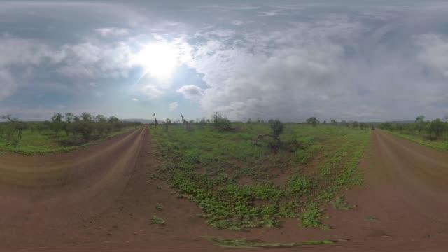 vídeos de stock e filmes b-roll de dry african landscape with giraffe - panorama equiretangular
