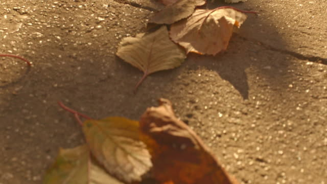 Dry autumn leaves on the ground