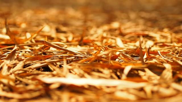 vídeos de stock, filmes e b-roll de seco folha de bambu, câmera em movimento - folha de bambu