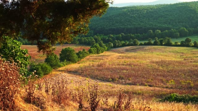 dry countryside at summer in tuscany - italy - pianura video stock e b–roll