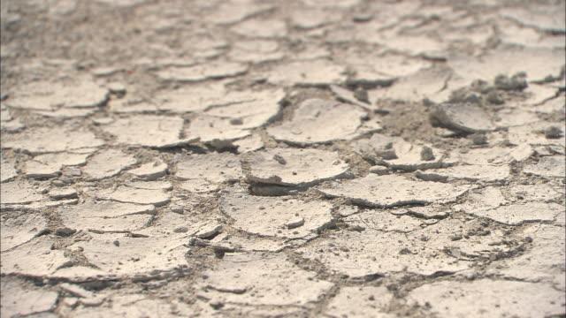 vídeos de stock, filmes e b-roll de cu, dry cracked earth in desert, kalahari desert, botswana, africa - deserto de kalahari