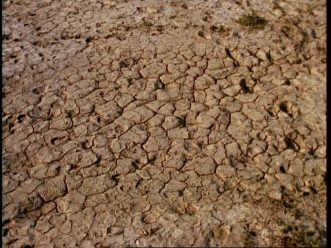 ms dry cracked earth, pan right and tilt up to wa of desert with wild ass on horizon, gujarat, india - 動物の色点の映像素材/bロール