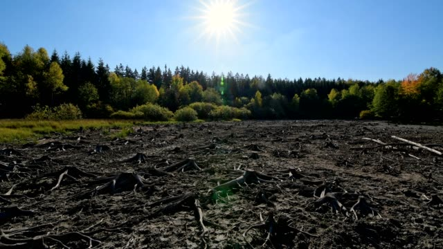 dry forest lake with sun in autumn, mülbener see, waldbrunn, baden-württemberg, germany - ausgedörrt stock-videos und b-roll-filmmaterial