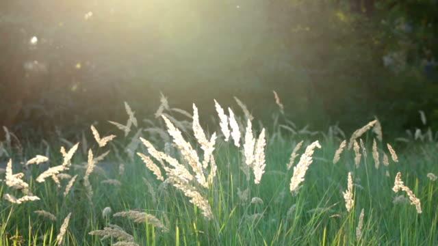 Dry grass illuminated by sun.