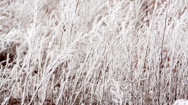 vidéos et rushes de sec herbe dans un champ en hiver - givre