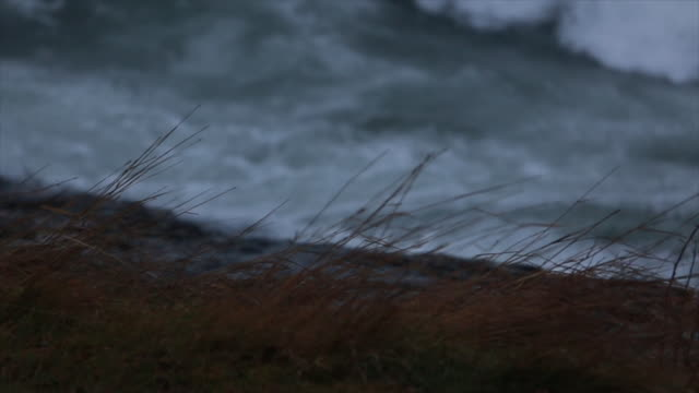dry grass swaying on rock with waves crashing in background - lago superiore video stock e b–roll