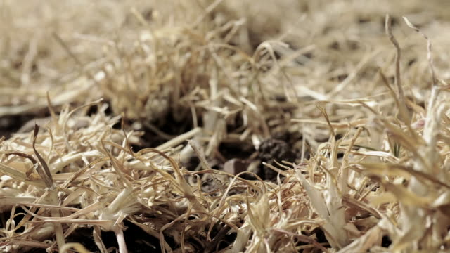 cu dry grass timelapse - grass family stock videos & royalty-free footage