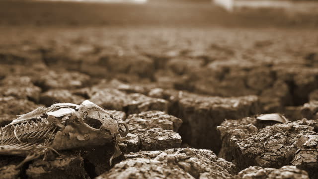 dry ground - arid climate stock videos and b-roll footage