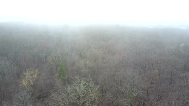 dry leafless treetops in fog - bare tree stock videos & royalty-free footage