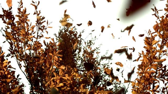 HD: Trockene Blätter fallen auf einem Baum
