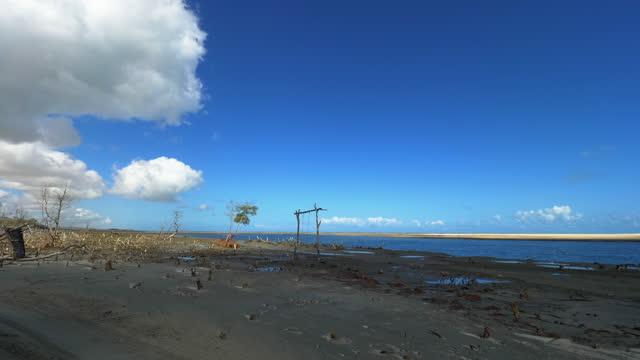 dry mangrove in jericoacoara, fortaleza, ceara, brazil - arid stock videos & royalty-free footage