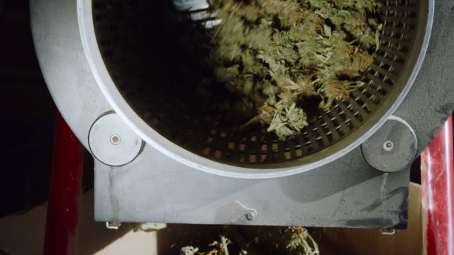 dry marijuana (cannabis) buds rotate inside a trimming machine while the leaves drop out of the bottom in an indoor processing facility (hemp) - legalisation stock videos & royalty-free footage