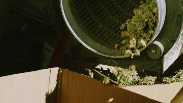 vídeos y material grabado en eventos de stock de cogollos secos de marihuana (cannabis) giran dentro y caen de una máquina de recorte en una caja de cartón en una instalación de procesamiento interior (hemp) - marihuana hierba de cannabis