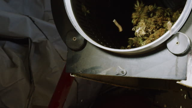 dry marijuana (cannabis) buds rotate inside and fall out of a trimming machine in an indoor processing facility (hemp) - legalisation stock videos & royalty-free footage