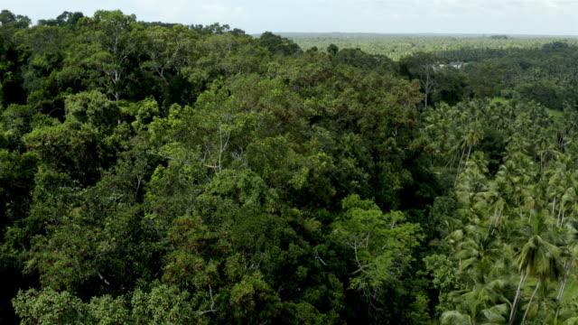 vidéos et rushes de forêt tropicale sèche aérienne - exotisme