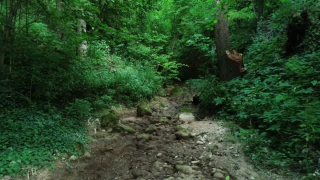 dry riverbed - fango video stock e b–roll