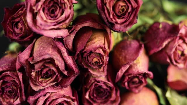 vídeos y material grabado en eventos de stock de secar las rosas - seco