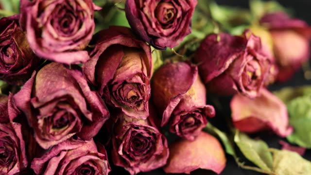 vídeos de stock, filmes e b-roll de seco rosas - bouquet