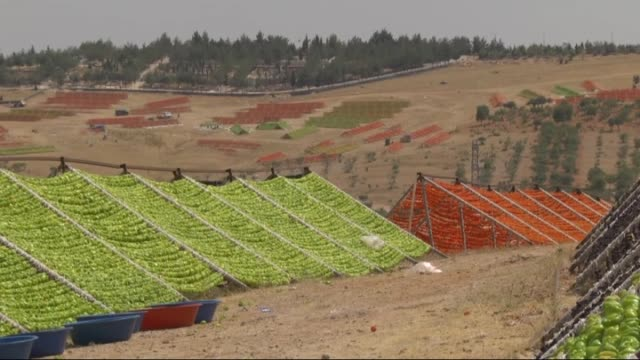 dry season of vegetables started in turkey's gaziantep and vegetables were laid out under the sun on 19 july, 2015. vegetables will be sold to... - trocknen stock-videos und b-roll-filmmaterial