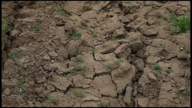 stockvideo's en b-roll-footage met dry soil with growing plant, ardeche, france - europese cultuur