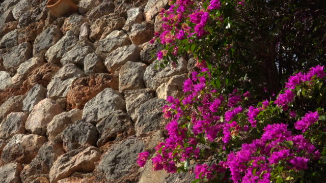 dry stone wall in fornalutx, tramuntana mountains, majorca - magenta stock videos & royalty-free footage