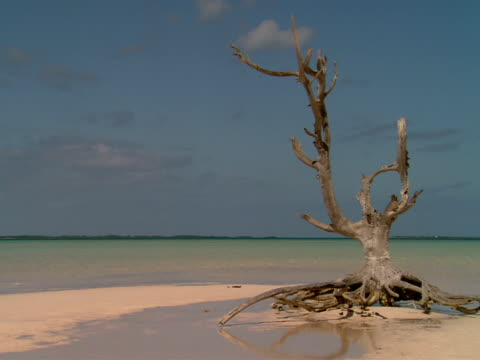 ms,  dry tree on beach,  harbour island,  bahamas - stationary process plate stock videos & royalty-free footage