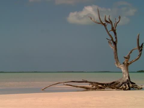 stockvideo's en b-roll-footage met ms,  dry tree on beach,  harbour island,  bahamas - plate met stilstaande achtergrond