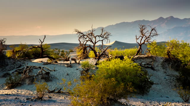dry trees in desert - death valley national park stock videos & royalty-free footage