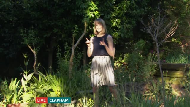 dry weather challenging for gardeners and bee keepers; england: london: clapham: ext reporter to camera - gardening stock videos & royalty-free footage