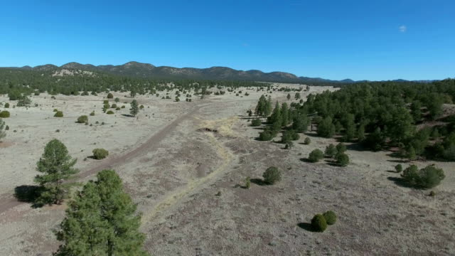Dry wooded area aerial