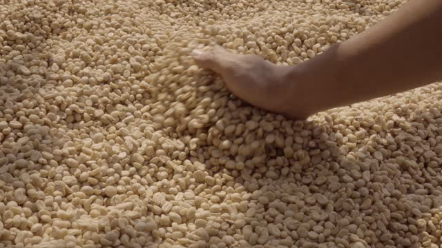 drying coffee bean slomo spreading. - drying stock videos & royalty-free footage