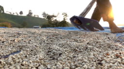 Drying coffee seed slow motion