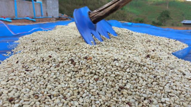 vídeos y material grabado en eventos de stock de secado de café semilla - nicaragua