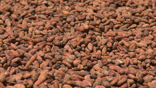 drying roasted raw cocoa seeds,  el ceibo, bolivia - drying stock videos & royalty-free footage