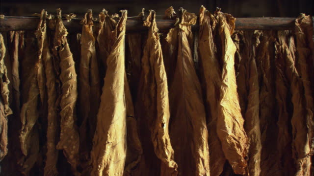 cu, pan, drying tobacco leaves, pinar del rio, cuba - tobacco product stock videos & royalty-free footage
