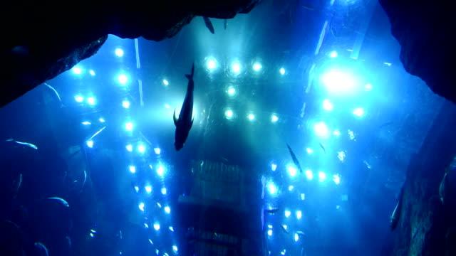 dubai aquarium - aquarium stock videos and b-roll footage