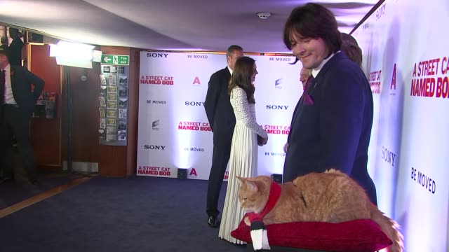 duchess of cambridge at 'a street cat named bob' premiere; int catherine chatting with people at film premiere / close shot bob the cat / catherine... - premiere stock videos & royalty-free footage