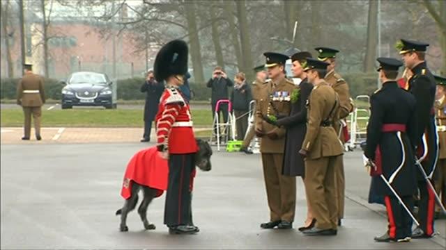 duchess of cambridge presents shamrocks on st patrick's day; england: hampshire: aldershot: mons barracks: ext catherine, duchess of cambridge... - aldershot stock videos & royalty-free footage