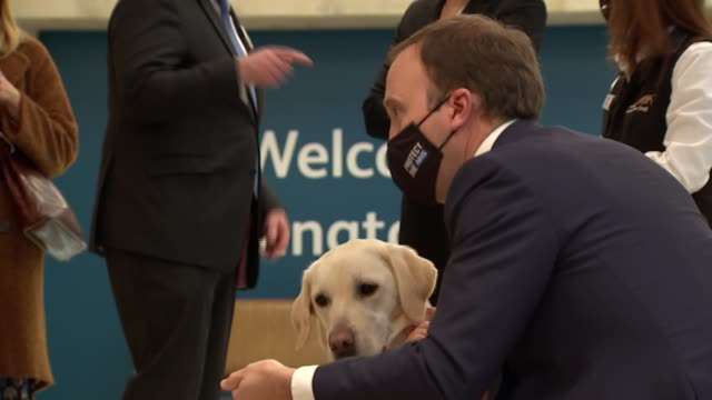 duchess of cornwall and matt hancock meet medical detection dogs at paddington station; england: london: paddington station: int camilla, duchess of... - stroking stock videos & royalty-free footage