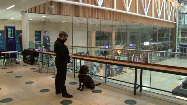 duchess of cornwall and matt hancock meet medical detection dogs at paddington station; england: london: paddington station: int camilla, duchess of... - paddington railway station stock videos & royalty-free footage