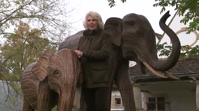 duchess of cornwall launches fundraising campaign for elephant charity; england: gloucestershire: highgrove house: ext camilla, duchess of cornwall,... - royalty stock videos & royalty-free footage