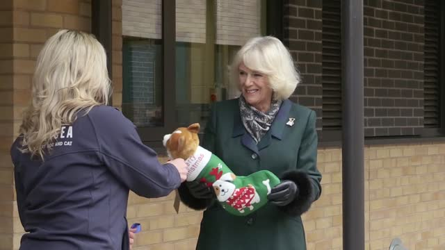 duchess of cornwall visits battersea dog's home in windsor; england: windsor: battersea dog's home: ext camilla, duchess of cornwall, wearing face... - berkshire england stock videos & royalty-free footage