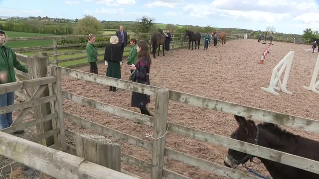 duchess of cornwall visits horses for people centre in county down; northern ireland: county down: ext camilla, duchess of cornwall with june burgess... - stroking stock videos & royalty-free footage