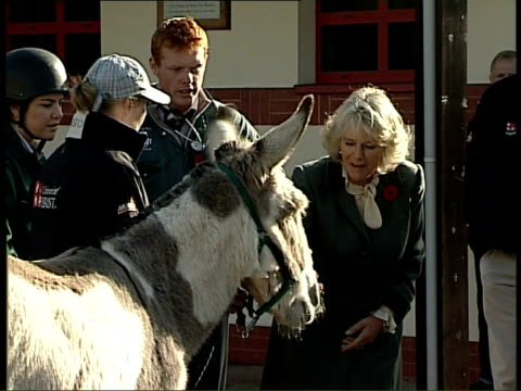 duchess of cornwall visits the school of veterinary science at bristol university ext camilla chatting with veterinary students next donkey as away - bristol university stock videos and b-roll footage