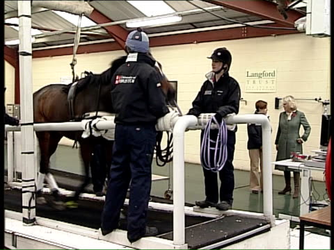 duchess of cornwall visits the school of veterinary science at bristol university ext plaque 'bristol university equine sports medicine centre' /... - bristol university stock videos and b-roll footage